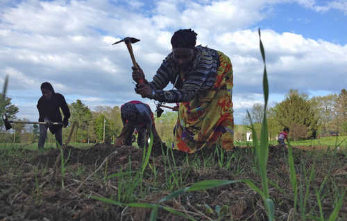 Somali Bantu farmers put down roots in Maine